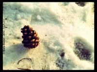 Pomme de pin - Angers - © Marie BIEBER - 2012