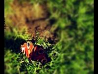 Papillon - Angers - © Marie BIEBER - 2013