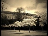 Parc de la Garenne - Angers - © Marie BIEBER - 2013