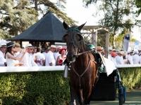 Grand Prix 2015 du Réseau Entreprendre 49 : Présentation des chevaux - Eventard - © Marie BIEBER - 2015