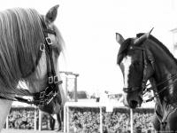 Grand Prix 2015 du Réseau Entreprendre 49 : Tango des chevaux - Eventard - © Marie BIEBER - 2015
