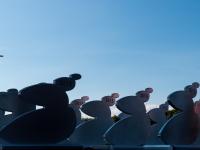 Kermesse du Réseau Entreprendre 2014 : Trophées - Rochefort sur Loire - © Marie BIEBER - 2014