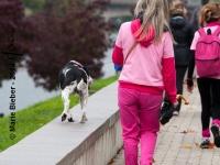 Octobre Rose 2014 : Les chiens aussi souhaitent sensibiliser au cancer du sein - Angers - © Marie BIEBER - 2014