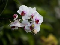 Terra Botanica : Orchidée - Angers - © Marie BIEBER - 2015