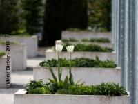 Terra Botanica : Tulipes - Angers - © Marie BIEBER - 2015