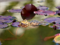 Terra Botanica : Grenouille - Angers - © Marie BIEBER - 2015
