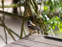 Terra Botanica : Oiseau - Angers - © Marie BIEBER - 2015